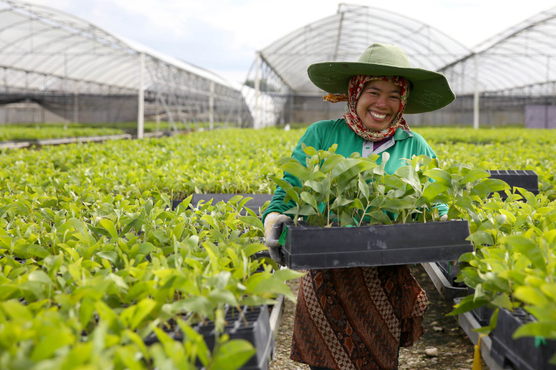 Kebun Bibit APRIL-RAPP: Kebun Pembibitan RAPP di Pangkalan Kerinci, Riau