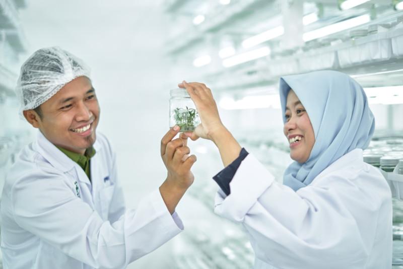 Kultur jaringan RAPP salah satu aktifitas Research and Development dengan mengembangan bibit akasia terbaik.