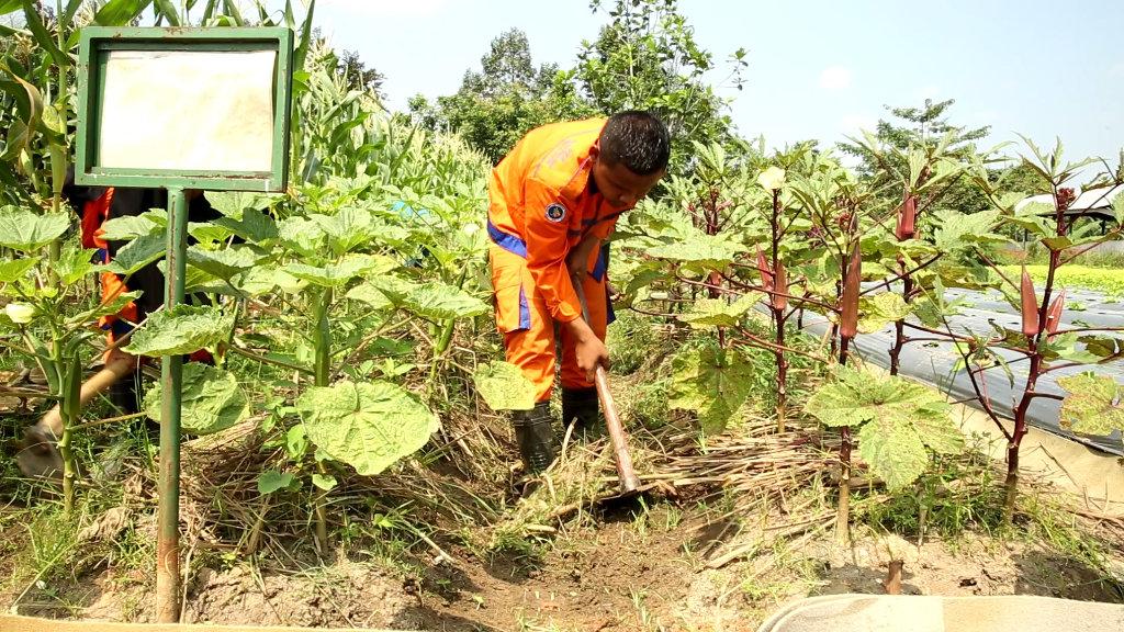 April Jalankan Program Pelatihan Pertanian Untuk Siswa Smk Di
