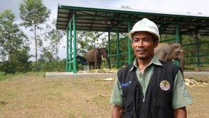 Mahot Elephant Flying Squad: Gajah Adala...