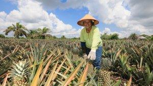 Program Pertanian Terpadu Bantu Petani