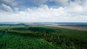 The Importance of Peatland For...